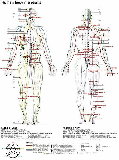 12 Major Meridian Chart-Acupuncture College-Florida