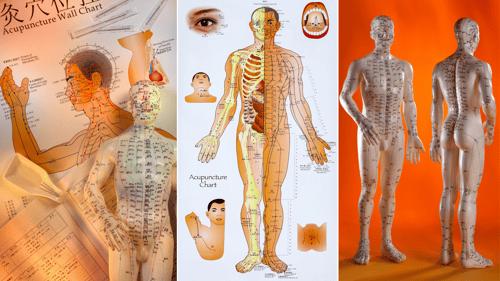 florida-acupuncture-schools-guide