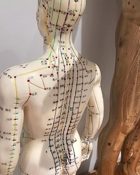 acupuncture-school-admisissions-model