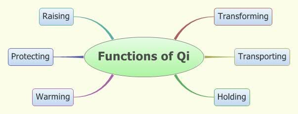 Functions-Qi-School-Acupuncture-Florida