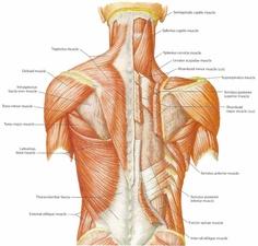 massage-therapy-muscle-school-miami