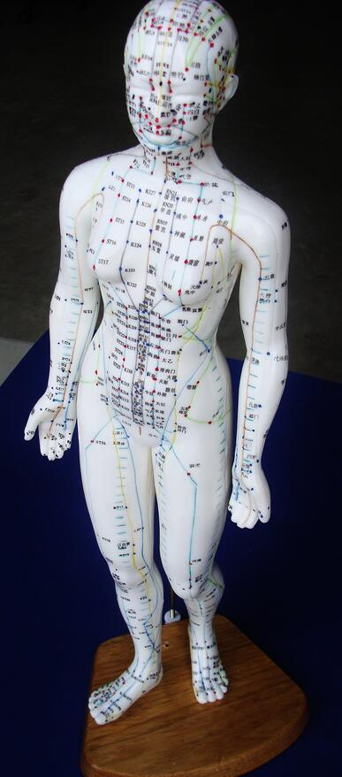 miami-acupuncture-school-model