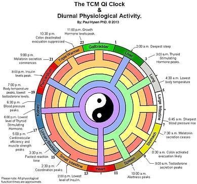 Qi-Dirunal-Cycle-Acupuncture-School