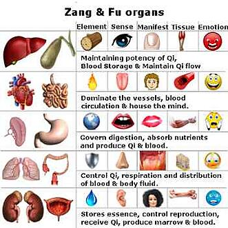 Zang-Fu Organs and Symptoms