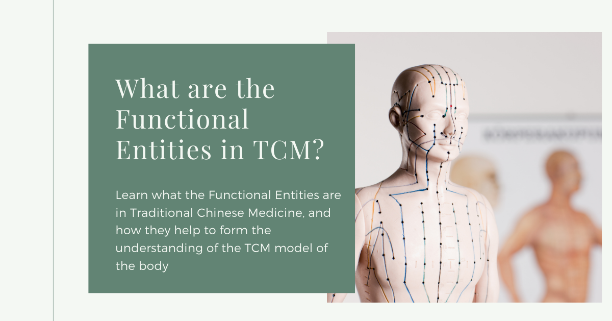 functional-entities-tcm-model-human-body