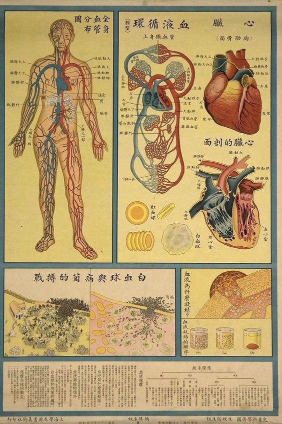 Traditional Chinese Model of the Human Body   Acupuncture ...